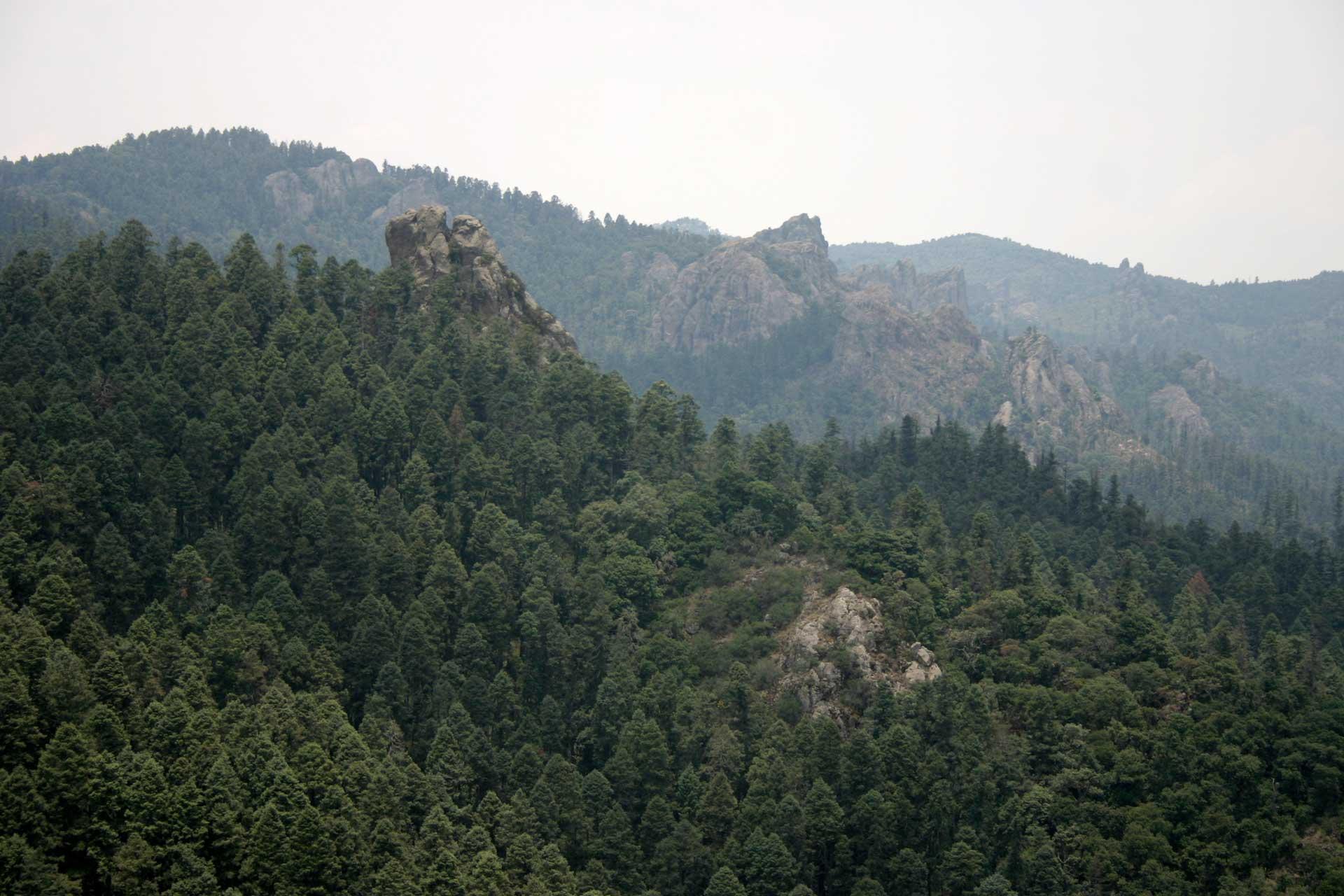 Parque-Nacional-El-Chico1
